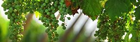 Ausflug Ätna mit Weinprobe