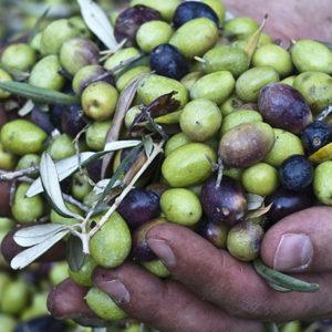 Sizilianisches Olivenöl