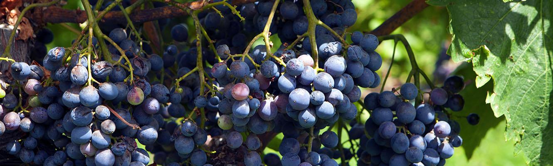 Etna Wein Tour