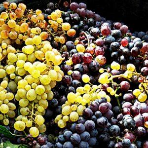 Die Trauben des Ätna